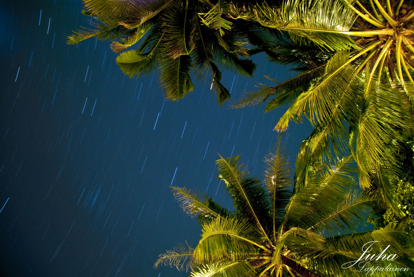 starry night under the coconut trees juha lappalainen photography