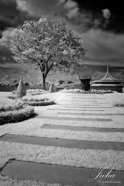 an infrared view at the park
