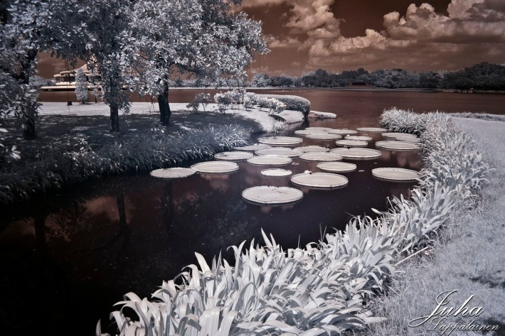 another infrared shot at the park, this time with lily pads