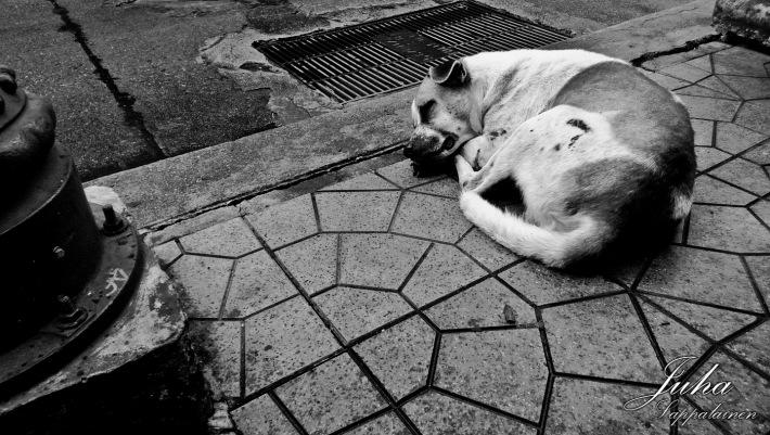 Bangkok: A Soi Dog
